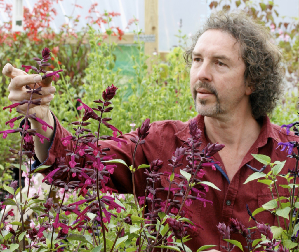 William Dyson of Dyson's Nurseries launched Salvia Love and Wishes at Chelsea 2015